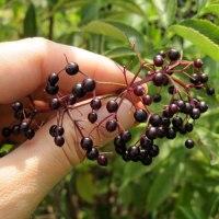 Wine Making Basics & Wonderful Wine Blog Posts