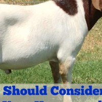 Guest Post by Lonestar Homestead:  Considering Adding Goats To Your Homestead?