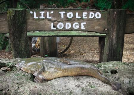 Cat Fishing Kansas Lodge (5)