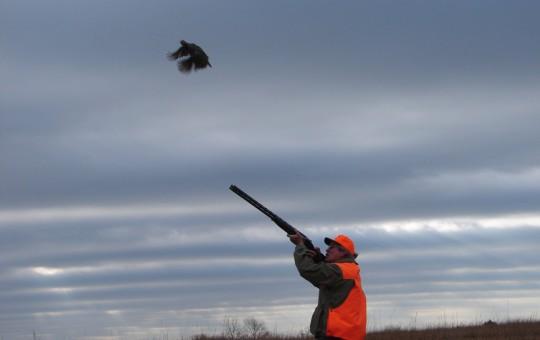Upland Birds- Pheasant hunting Kansas (6)