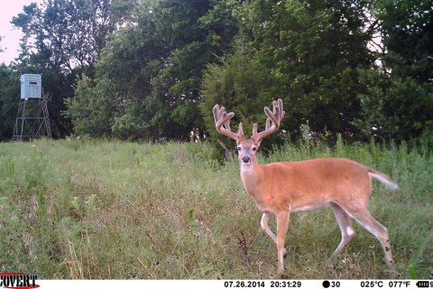 Deer Trail Cam Photos