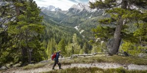 Hiker on path looking at mountain range through trees, Dolomites, Italy