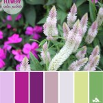 Flowery Fuchsia Color Palette
