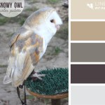 Snowy Owl Color Palette
