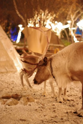 An elk in the Christmas market in Liseberg, Gothenburg