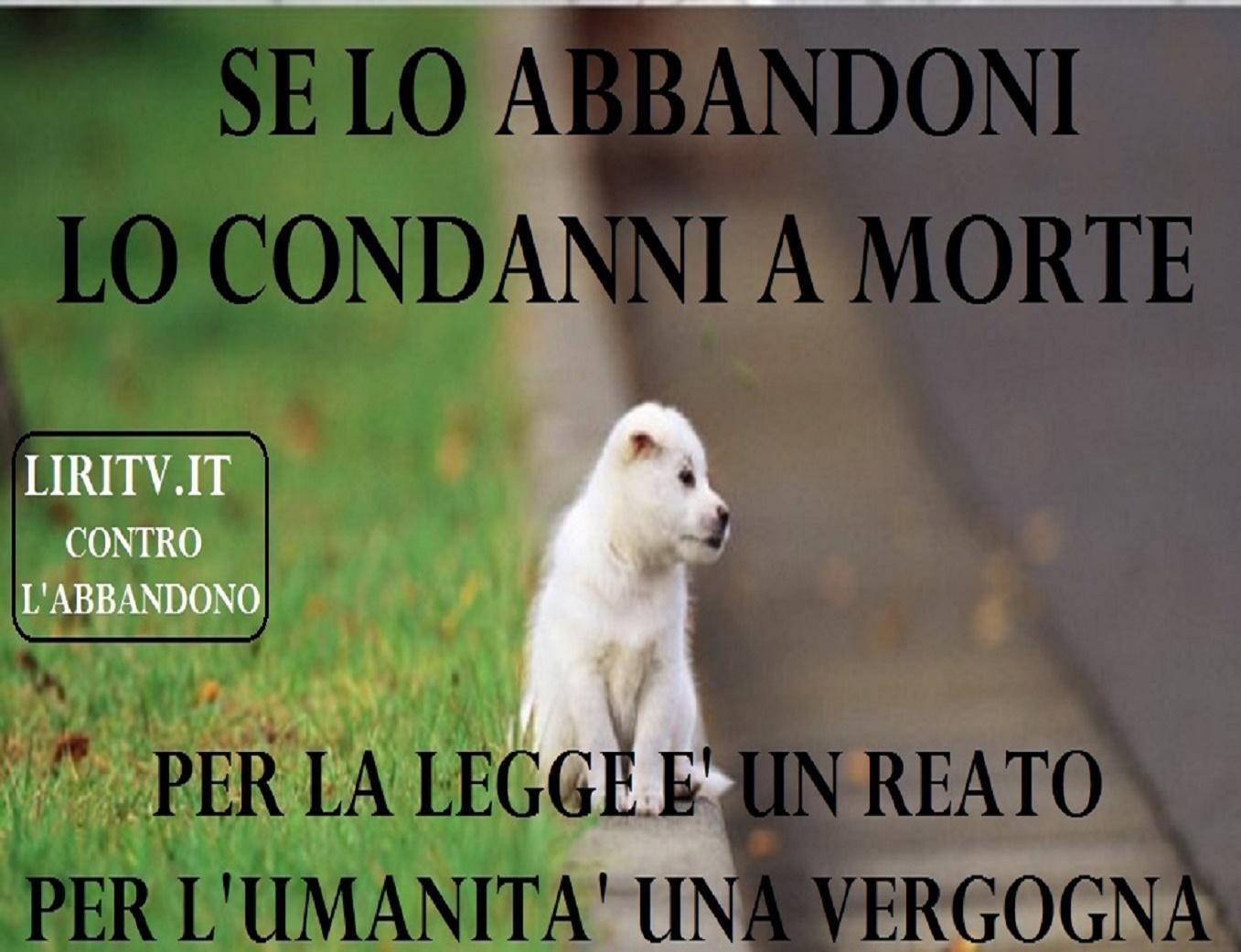 LIRITV CONTRO ABBANDONO CANI4