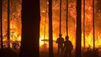 Forest fire in Vieira de Leiria