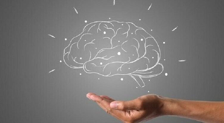 capacita' cognitive cervello