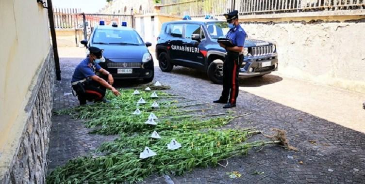 roccasecca piantagione droga carabinieri