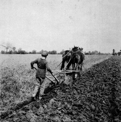 Boy Plowing