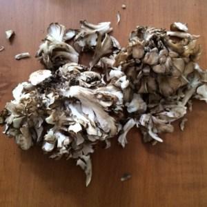 maitaki mushrooms