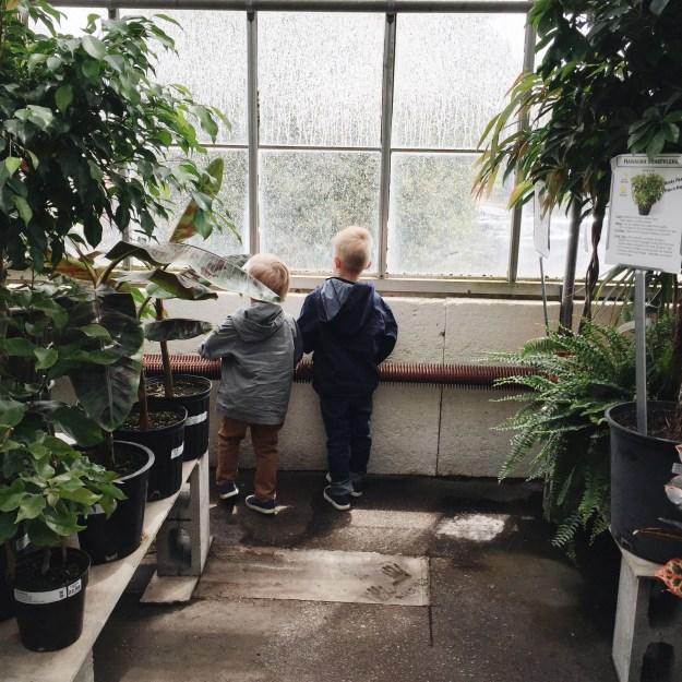 Belgian Nursery
