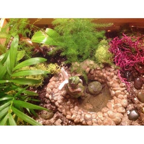 Medium Crop Of Little Fairy Garden