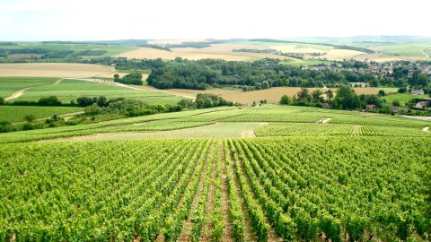 Burgundy: home to 1-percenter wines no longer. (Photo: Chantal Martineau.)