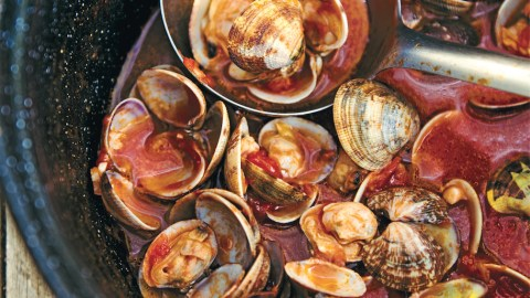how to purge clams