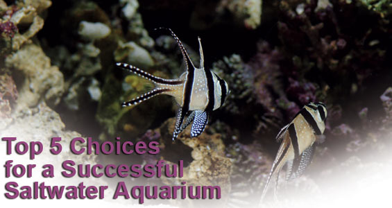 Popular Saltwater Fish: Top 5 Saltwater Fish for Beginners
