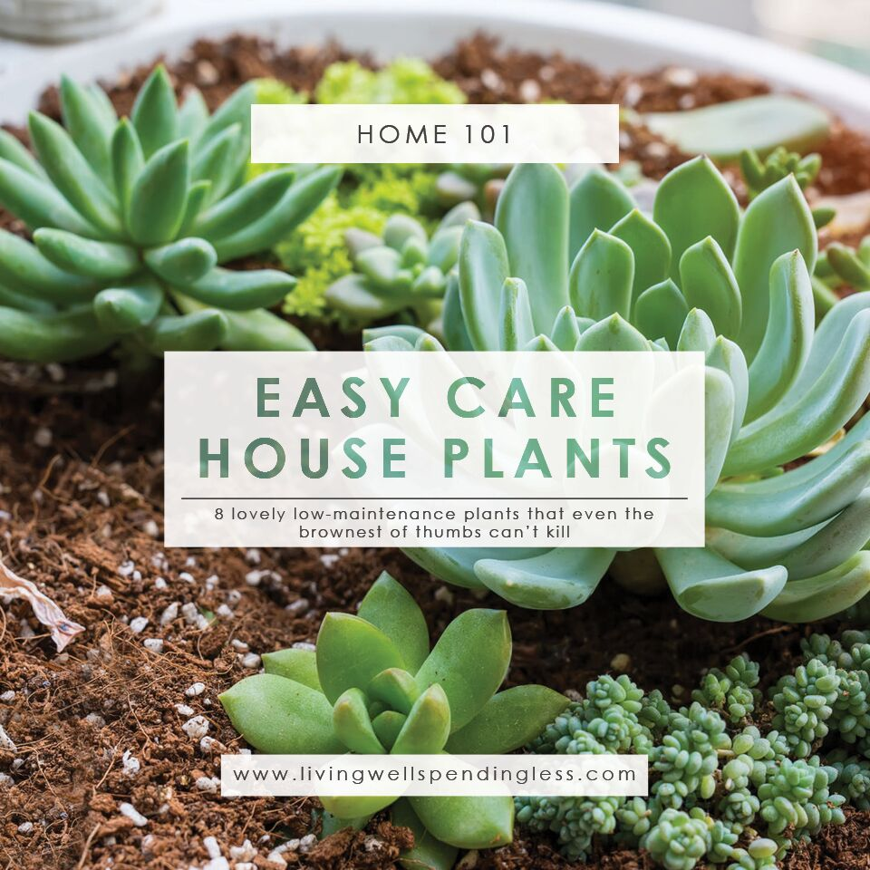 Sturdy Ks Succulents Poisonous To Cats Houseplants Easy Care House Plants Gardening Starter Plants Easy To Grow Houseplants Living Well Spending Are Sedum Succulents Poisonous To Cats Are Hens houzz-03 Are Succulents Poisonous To Cats