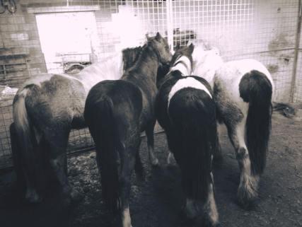 horse and pony trust