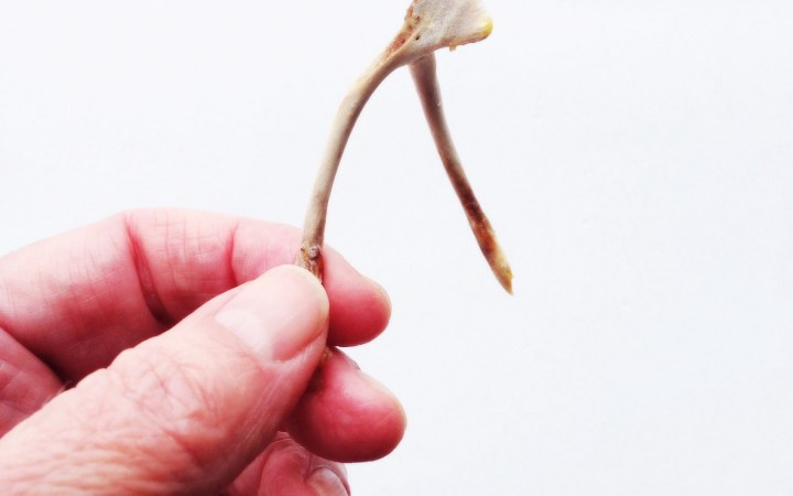 The Bones You Break & The Luck You Make