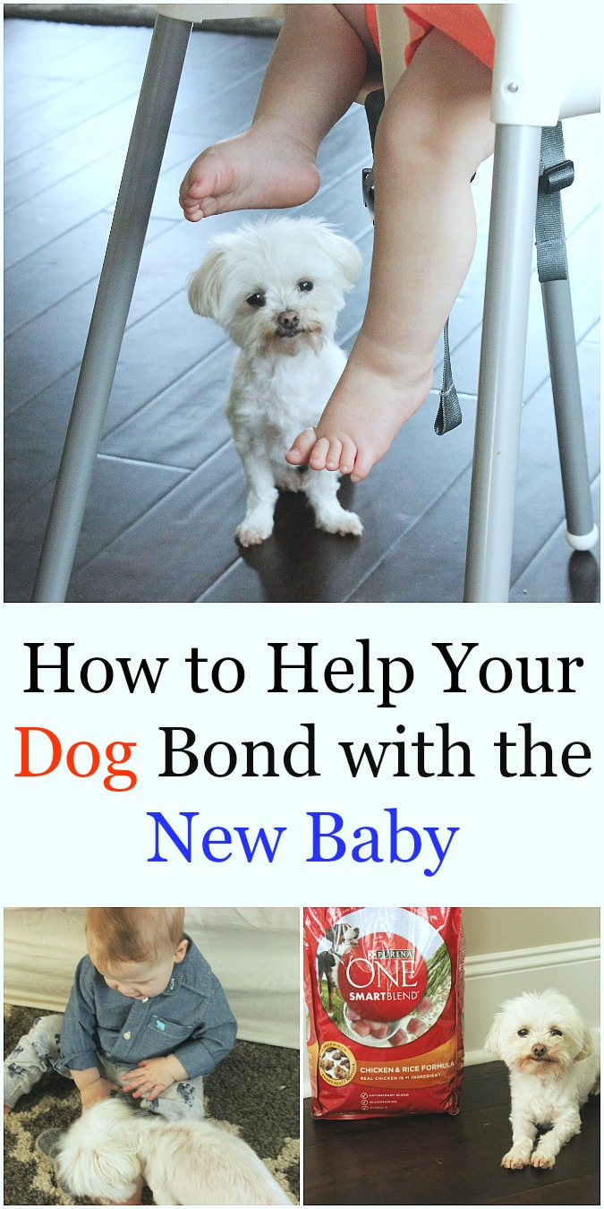 How to Help Your Dog Bond with the New Baby