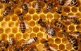 11 ways to know if the honey is Pure