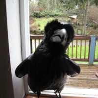 Crazy Crow Can Talk - Waka Waka - Say Never More