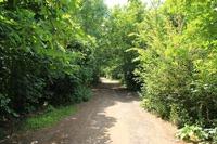 thames-path-spring-green