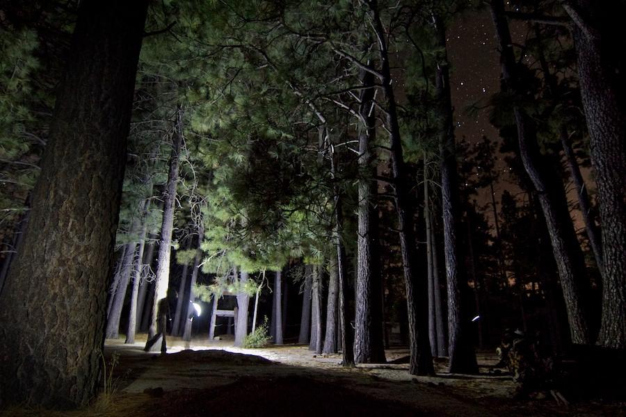 Un uomo cammina nel bosco con la torcia sotto le stelle