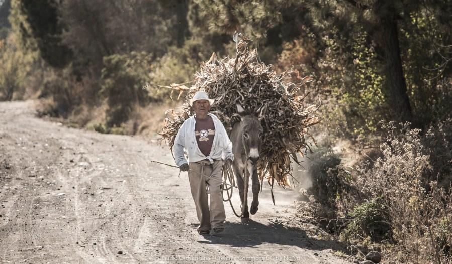 Campesino con asino carico cammina su uno sterrato del Messico vicino al vulcano Popo