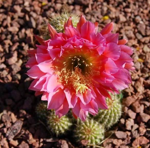 cactusgallerytweedy01