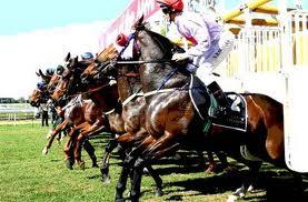 horse at starting gate