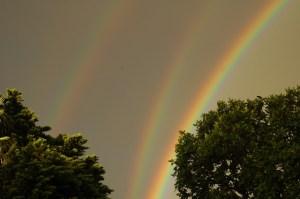 Four Ringed Rainbow