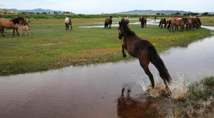 Qué hacer y ver en Mongolia