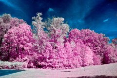 infrared autumn foliage photography