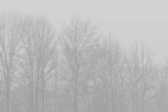 foggy-trees-3895