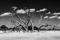 sinking trees