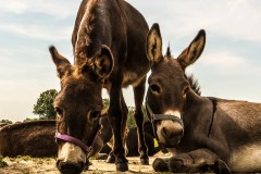 donkey-1020467