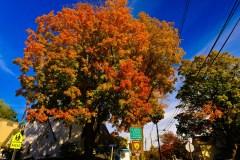 fall-color-louis-dallara-1522