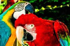 parrots-ldallara