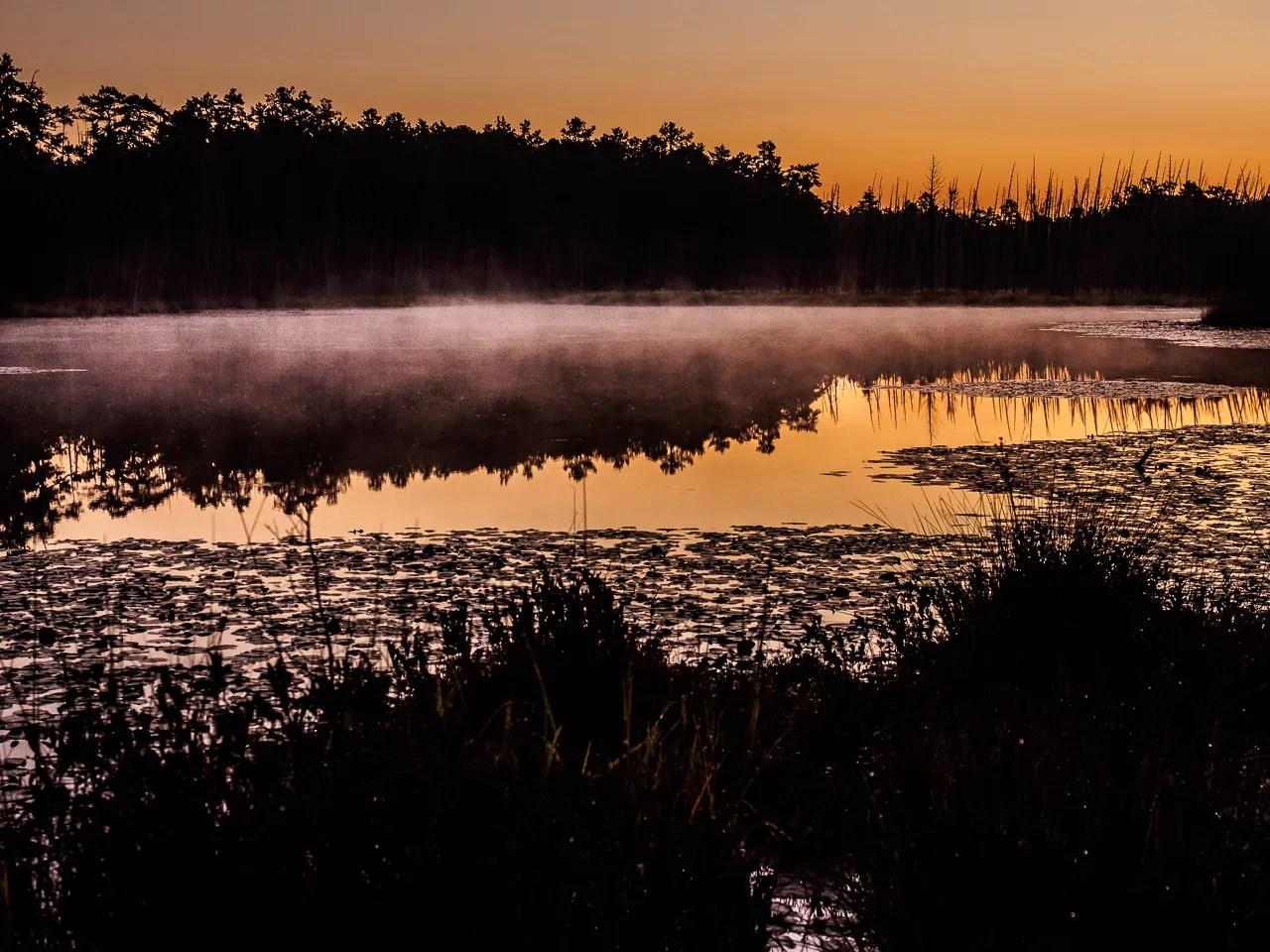 sunrise-pine-lands-2530