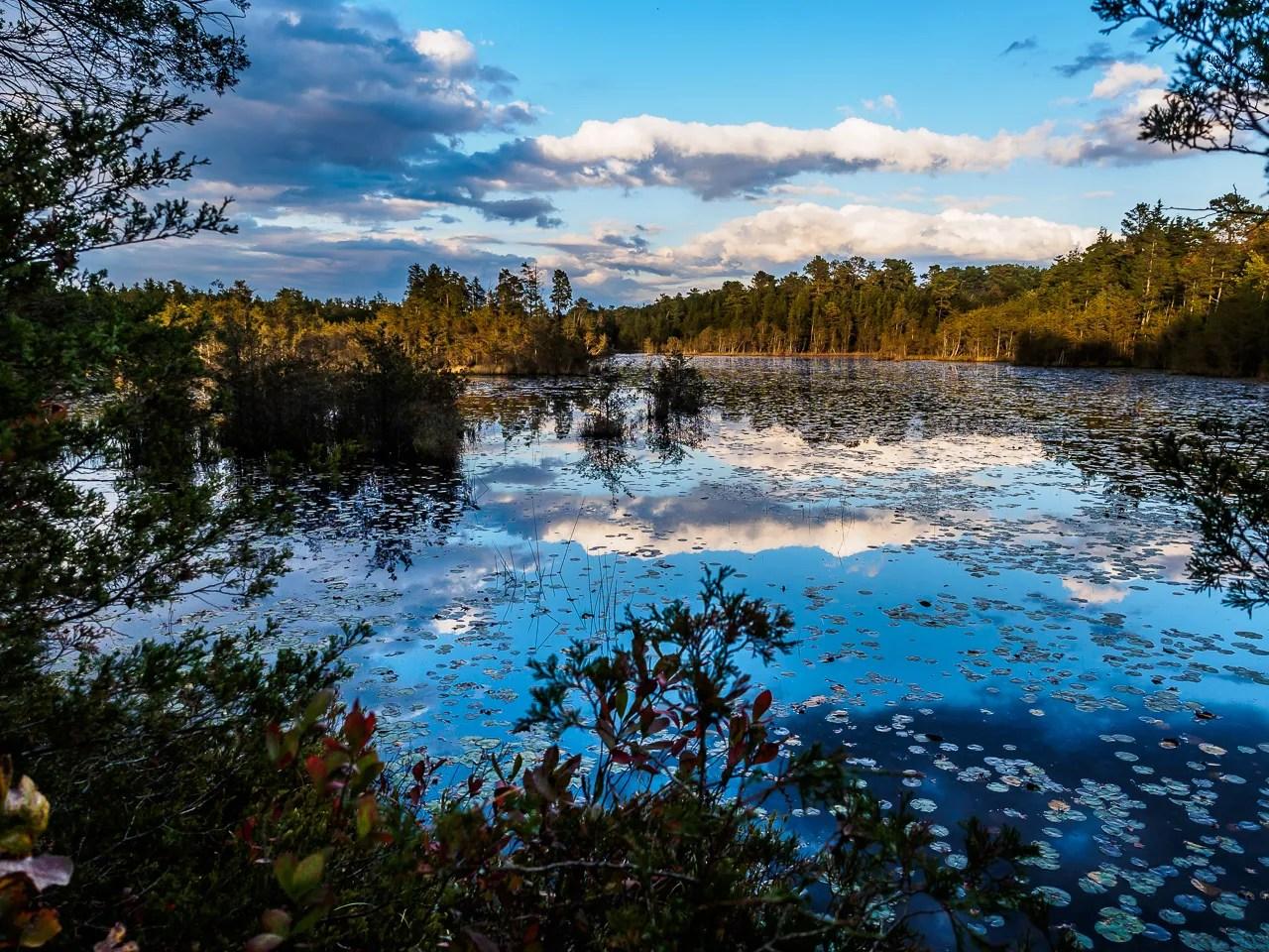 Beaver Pond Road