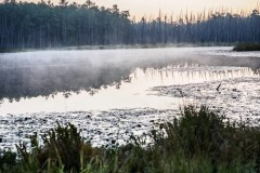 pine-lands-2554-1000x750