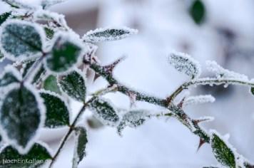 NochEinKaffee,de // Raureif: Dornen und Eiskristalle