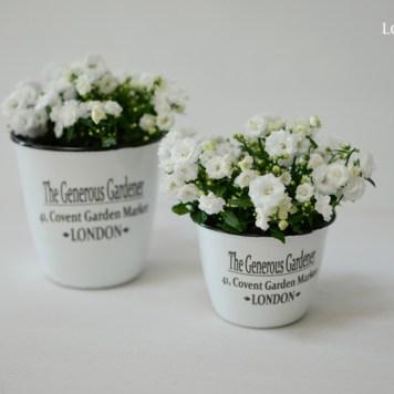 LoveAngdLilies.de // Blumen zum Muttertag