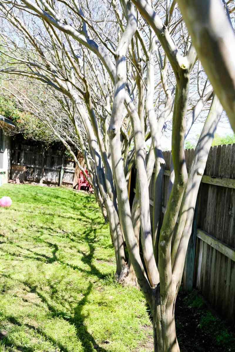 Large Of Backyard Tree Decorations