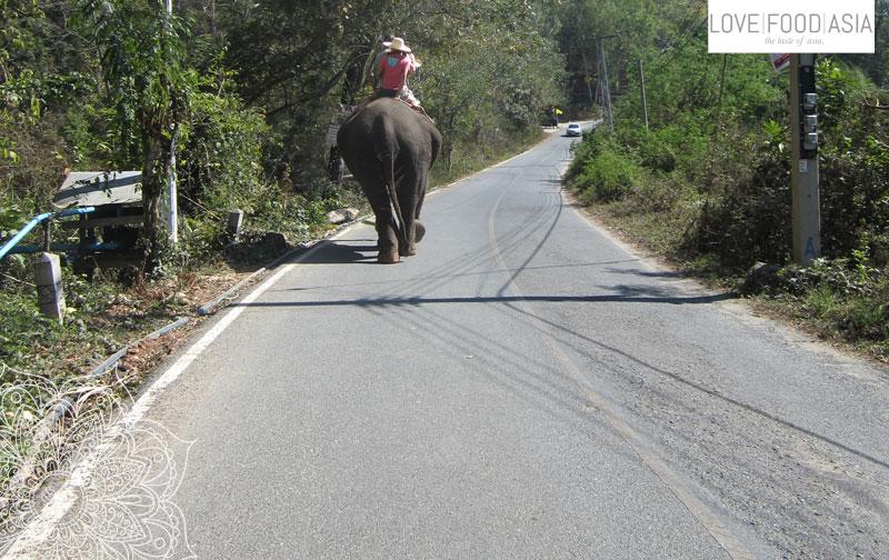 Heiße Quellen und Elefanten