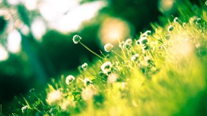 flora-1834944_960_720