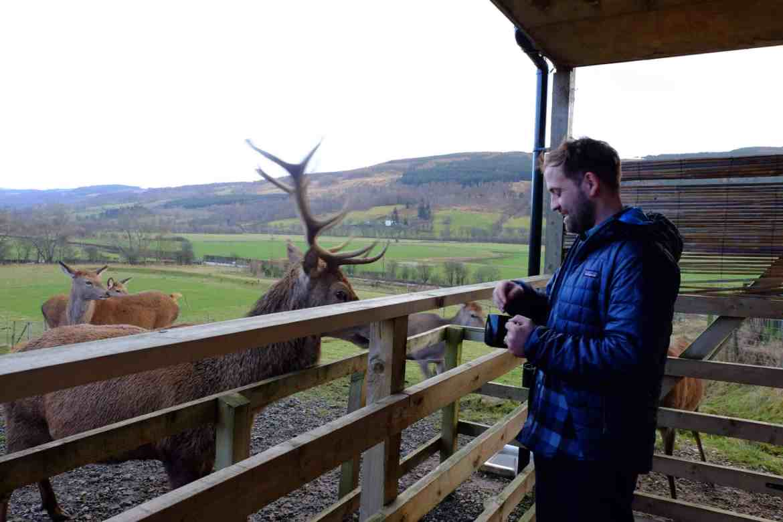 Highland-Safaris-Red-deer-4
