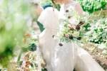 wpid462059-victorian-glasshouse-wedding-41.jpg