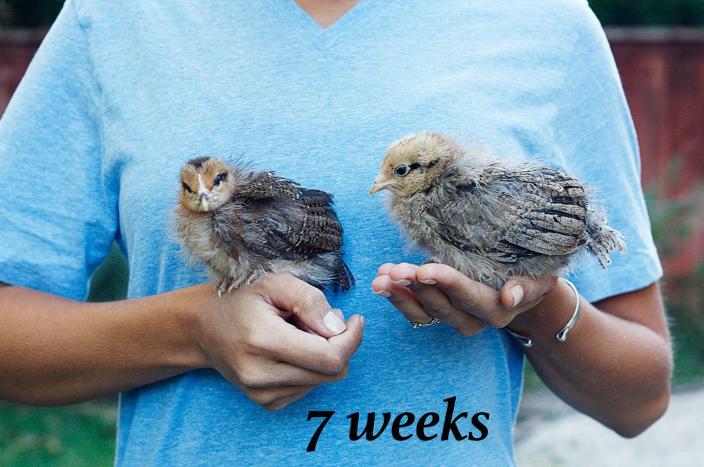 sassy-chicks